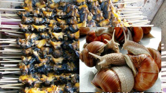 Hukum Makan Daging Siput / Bekicot Halal Apa Haram?